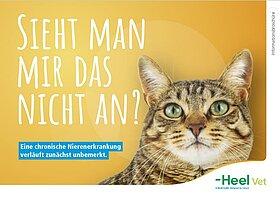 Die chronische Nierenerkrankung (CNE) bei Katzen.