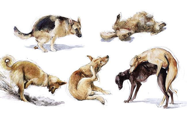 Verschiedene Alltagsbewegungen eines Hundes.