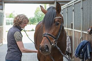 Frau mit Pferd in einem Stall.