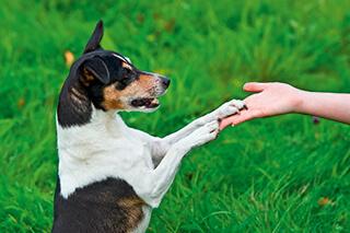 einem hund wird die hand gereicht - aktion helping vets
