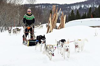 schlittenhunde-sind-hochleistungssportler-vetepedia