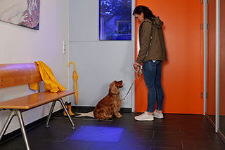 Hundebesitzer und Hund im Wartezimmer beim Tierarzt.