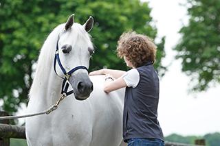Tierärztin behandelt Pferd mit muskulären Rückenproblemen