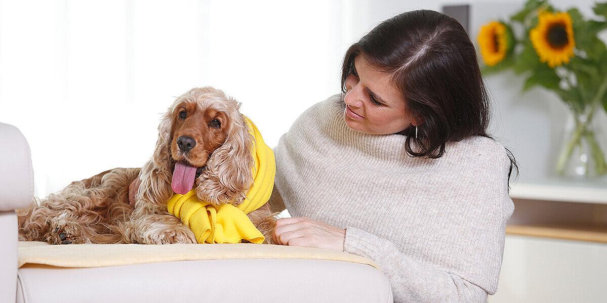 Hund wird vom Hundebesitzer gepflegt.