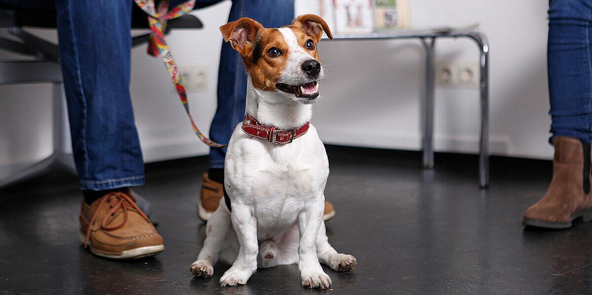 hund wartet im wartezimmer auf arthrose behandlung