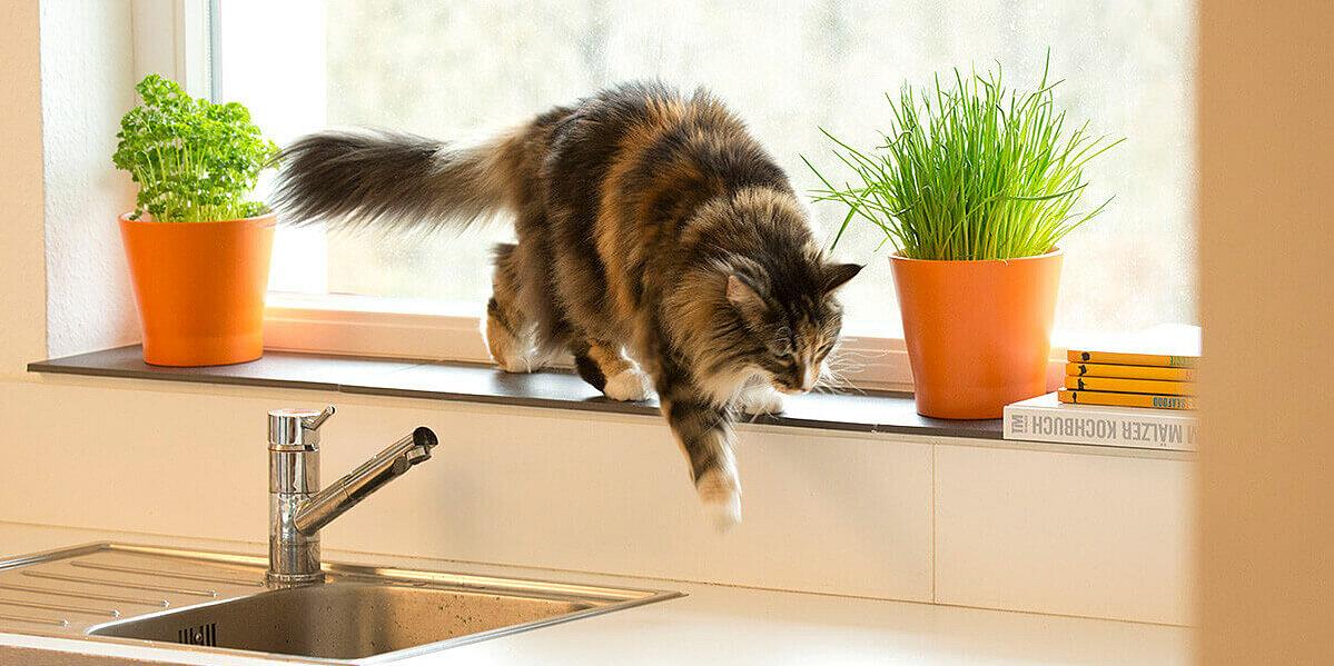 Getigerte Katze springt von der Fensterbank.