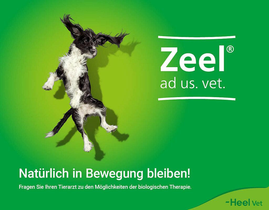 Footer Zeel