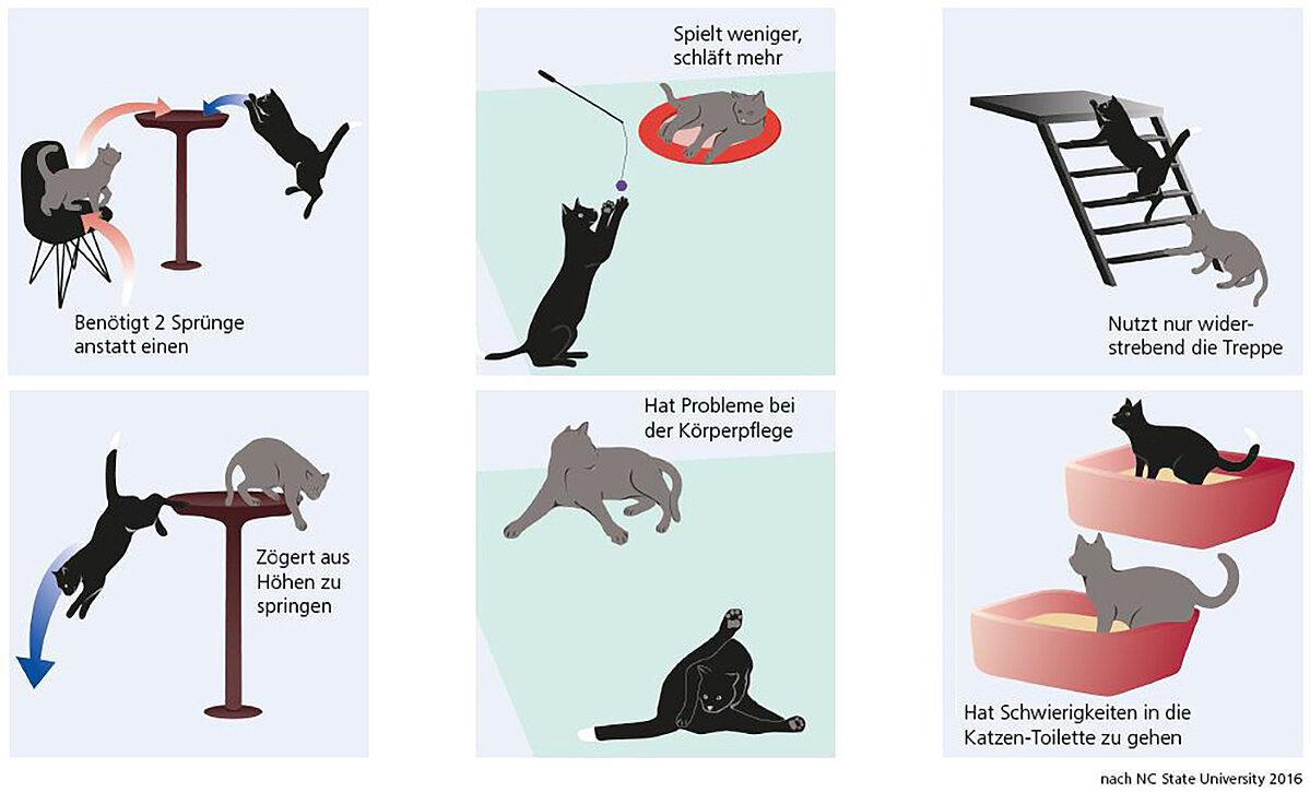 Symptome von einer Arthrose bei Katzen erkennen