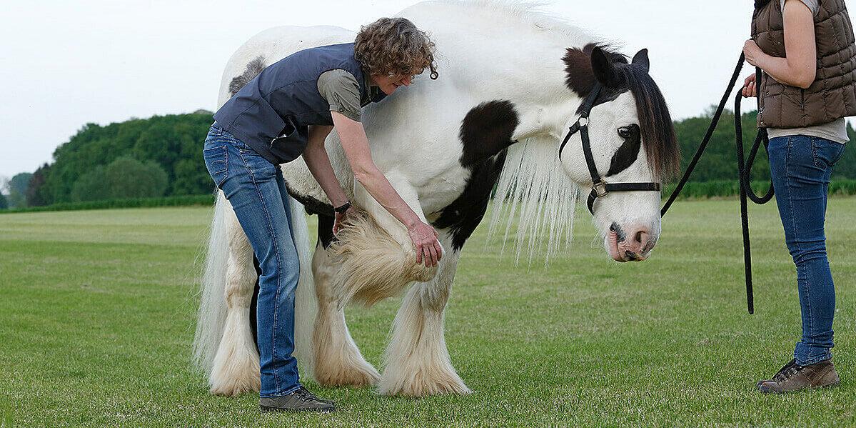 Behandlung eines Pferdes mit Arthrose.
