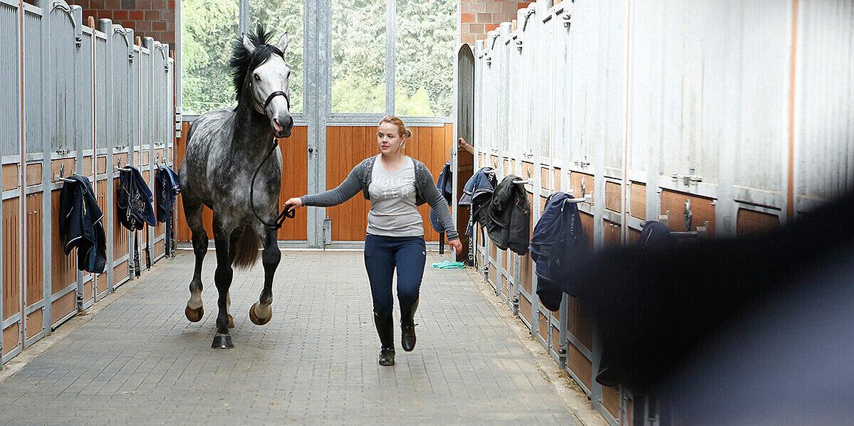 Grauschimmel-Pferd mit Frau im Stall.