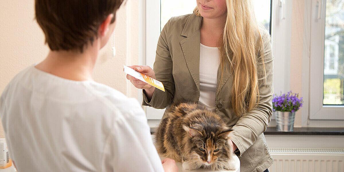 Katzenbesitzer bei der Untersuchung von Katzenschnupfen beim Tierarzt.