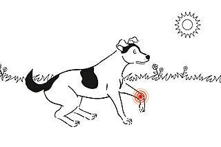 zeichnung hund mit verletzung am gelenk