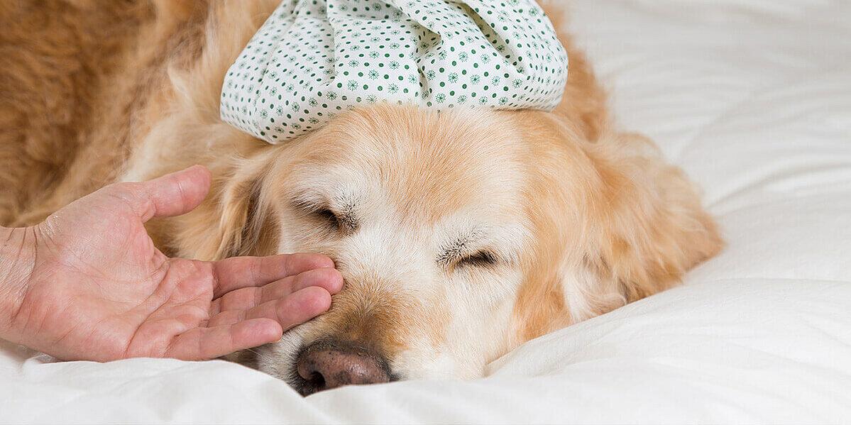 Hundehalter leistet bei seinem Hund erste Hilfe.