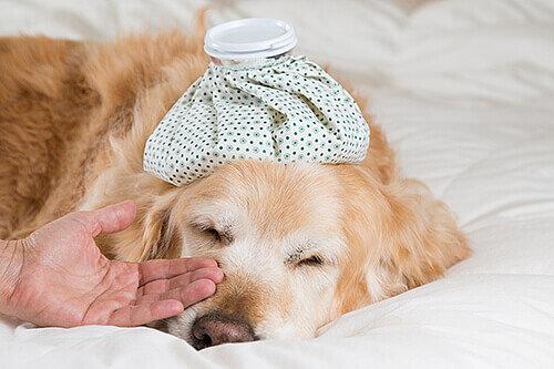 kranker hund pflege