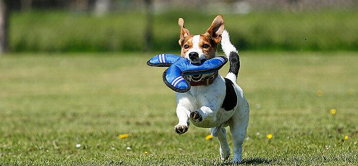 Vorhand des Hundes trainieren