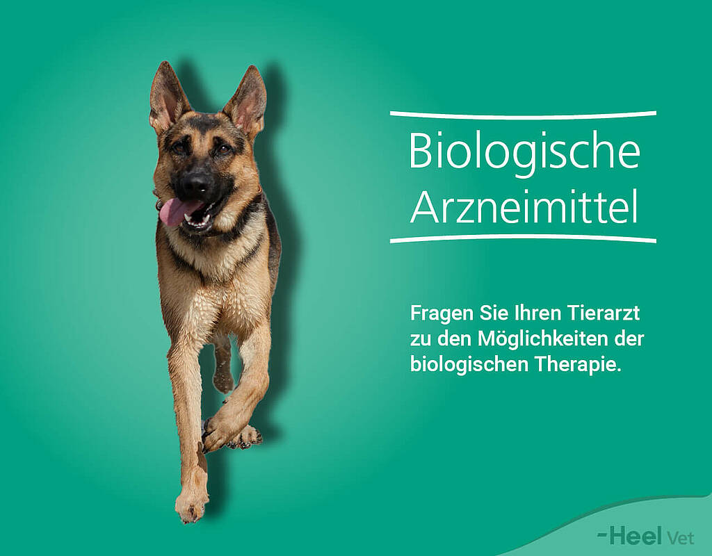 Footer Biologische Medizin