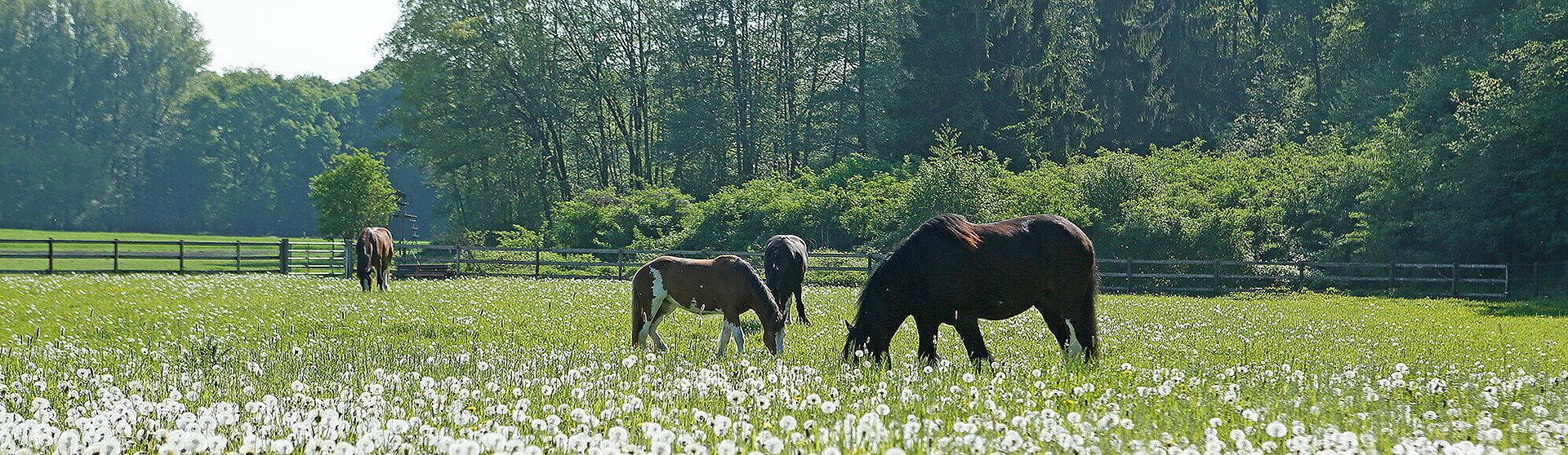 Pferde auf einer grünen Wiese.