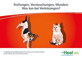 Prellungen, Verstauchungen und Wunden bei Hunden und Katzen