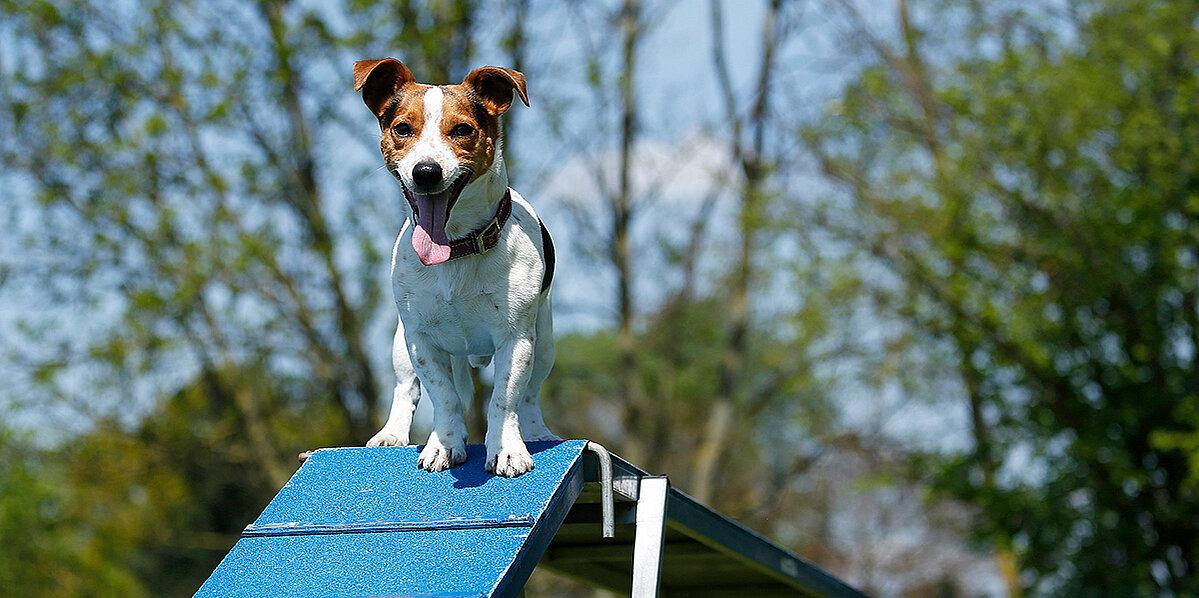 Hund beim stressfreien Hundetraining
