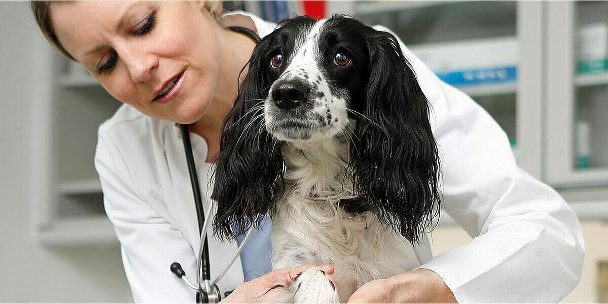 Eine Tierärztin untersucht einen Hund mit Verdacht auf Arthrose.