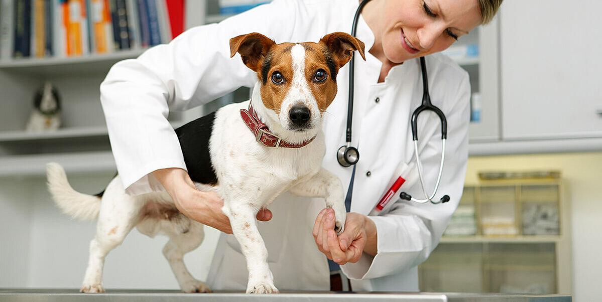 hundegelenke werden beim tierarzt untersucht