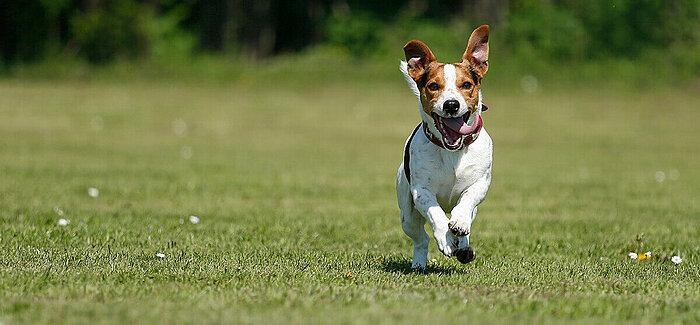 Stressfreies Hundetraining