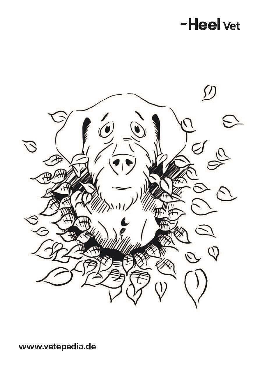 Malvorlage Hund Hecke