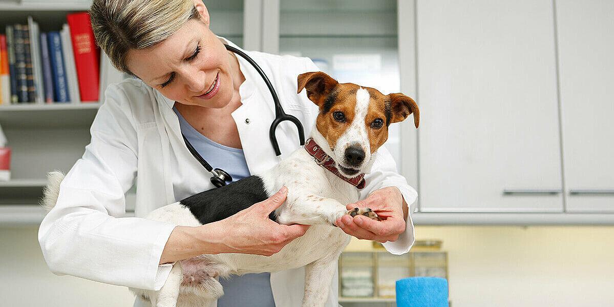 Tierärztin untersucht die Gelenke eines Hundes