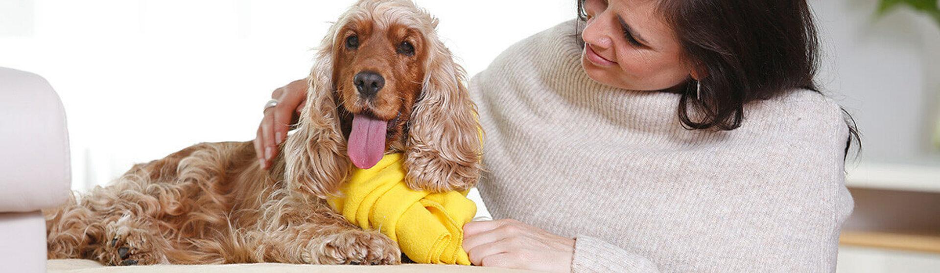 Hund mit Zwingerhusten Erkrankung.