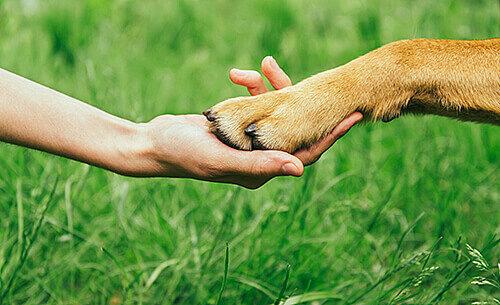 hand hält hundepfote auf wiese