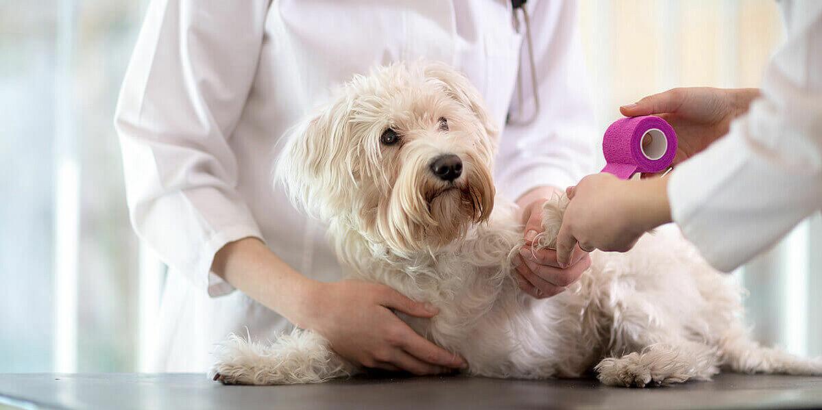 Behandlung eines Hundes an einer offenen Wunde.
