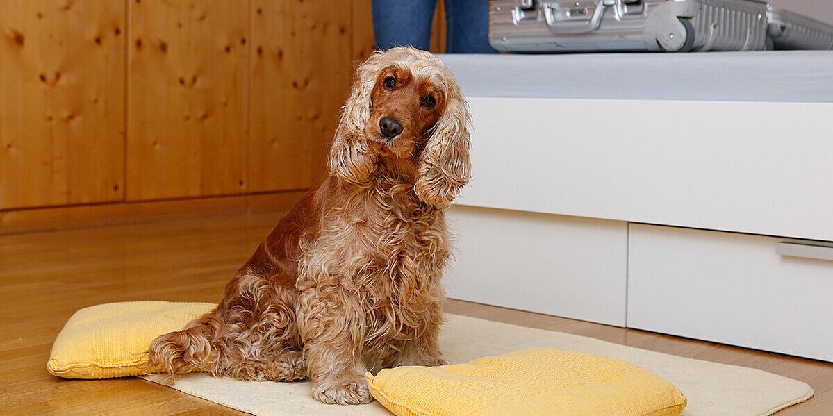 Der Hund sitzt auf seiner Decke.