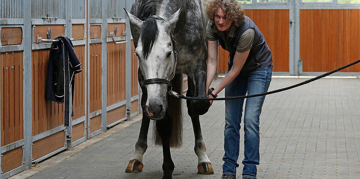 Behandlung des stumpfen Traumas beim Pferd.