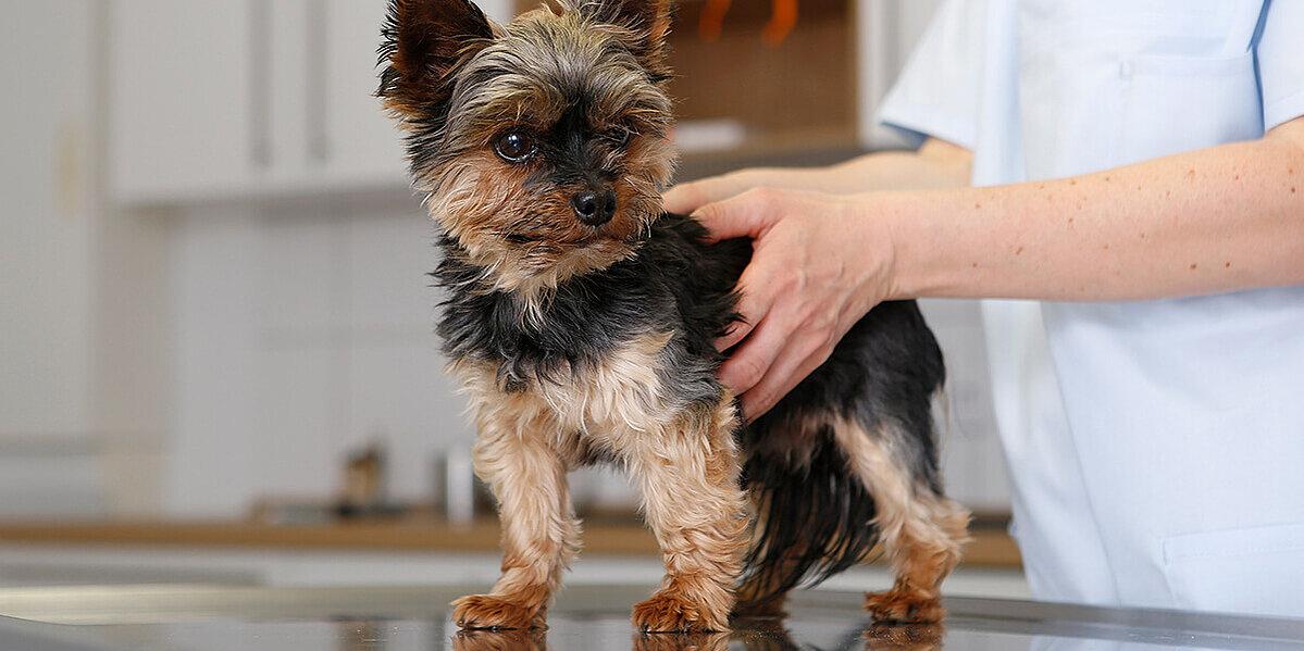 chronische nierenerkrankung hund