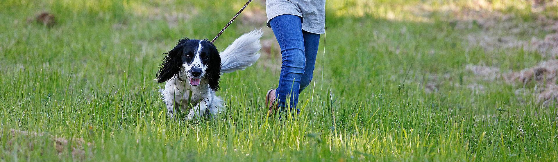 maedchen rennt mit hund ueber eine wiese