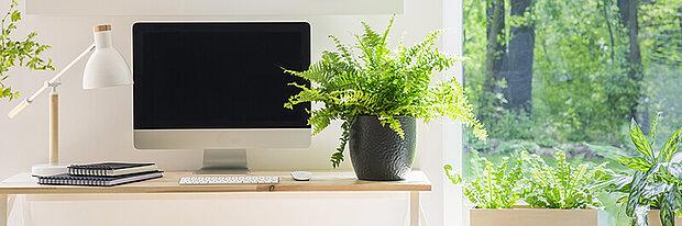 grüner arbeitstisch pflanze mac