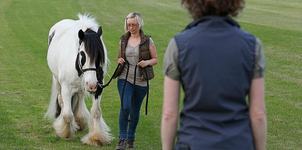 Pferd bei der Laufprobe