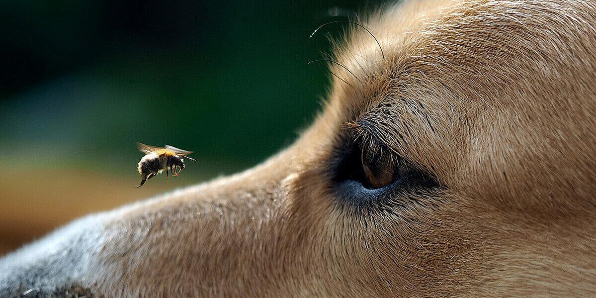 Ein Insekt auf der Schnauze des Hundes.