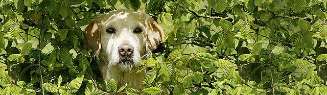 Hauterkrankungen Beim Hund Ursachen Symptome Behandlung Vetepedia