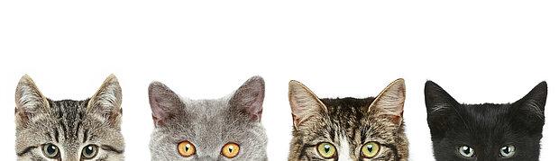 4 katztenköpfe die einen anschauen heelvet