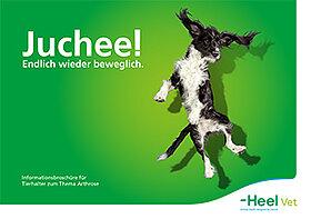 Informationsbroschüre für Hundehalter zum Thema Arthrose