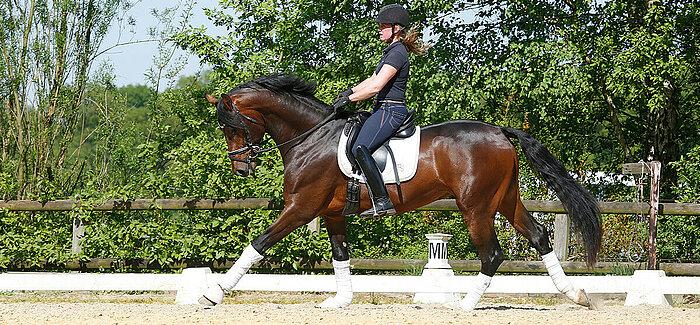 Exkurs: Atemwegserkrankung beim Sportpferd