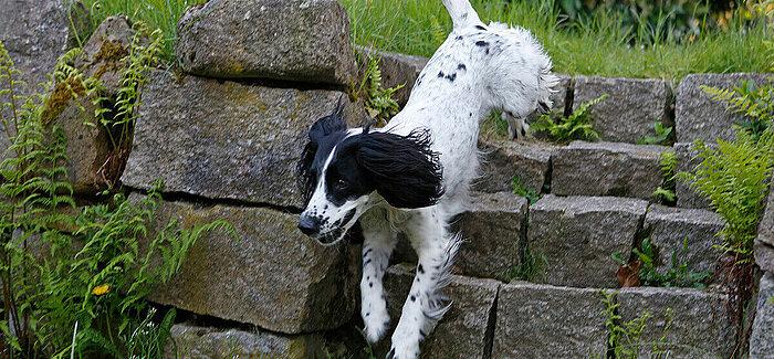 Hund | Arthrose-Check