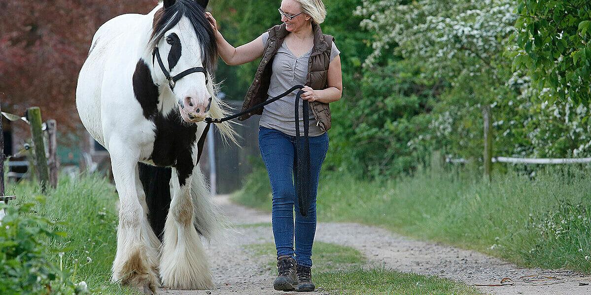 Auslauf mit einem an Arthrose erkrankten Pferd.