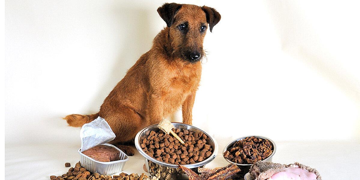 Unverträglichkeit eines Hundes bei falscher Ernährung.