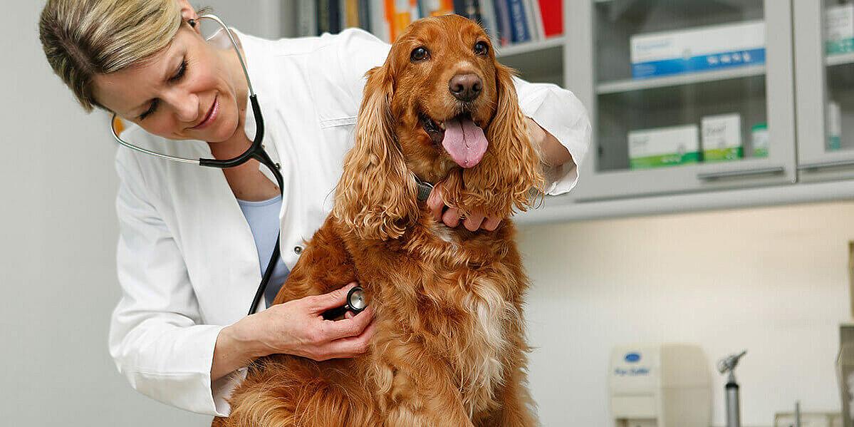 Hund wird von Tierärztin untersucht