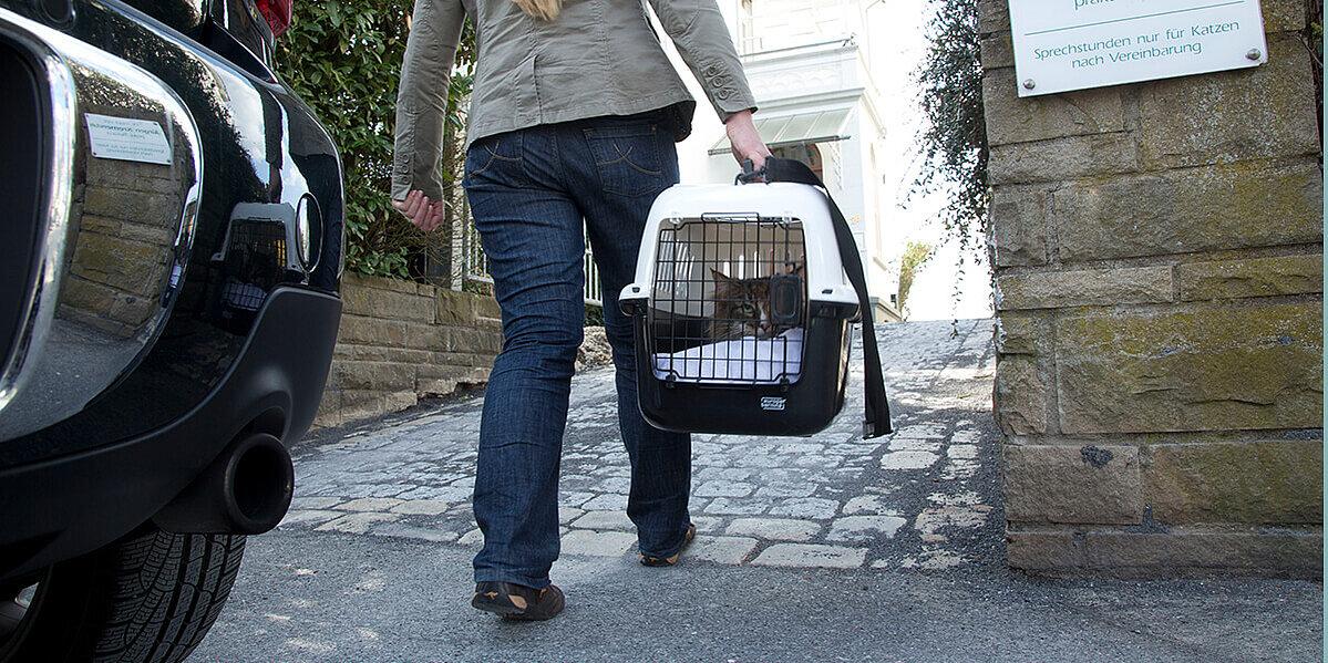 Der Transport einer Katze kann zu einem Stresserlebnis führen.