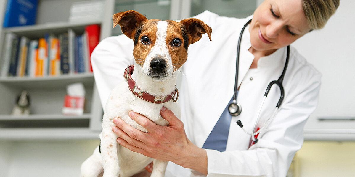 Tierärztin untersucht den Rücken eines Hundes