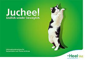 Informationsbroschüre für Katzenhalter zum Thema Arthrose