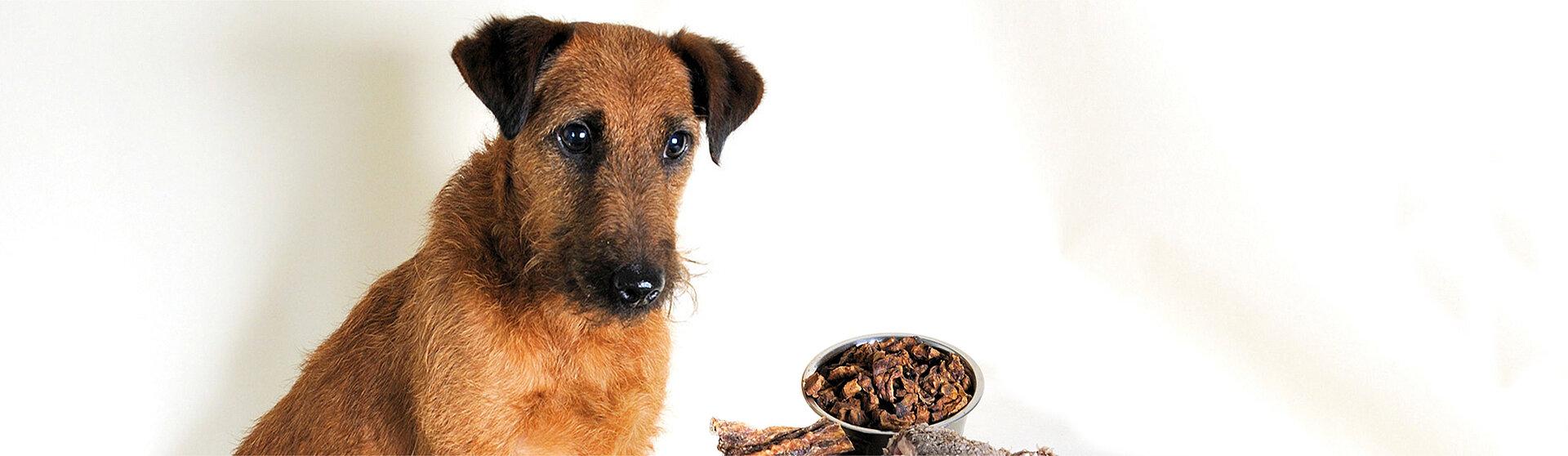 Hund mit Hundefutter.